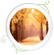 교목 은행나무 이미지